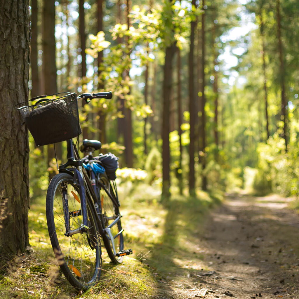 bike standing on the forest path